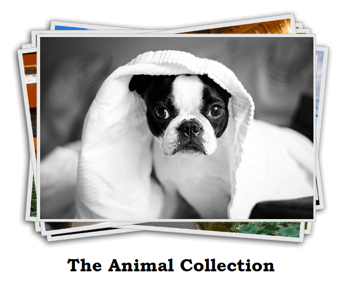 The Animal Collection Review